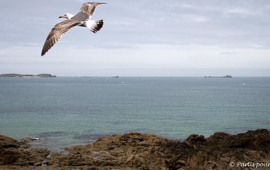 Mouette de Saint-Malo, Festival des Etonnants Voyageurs