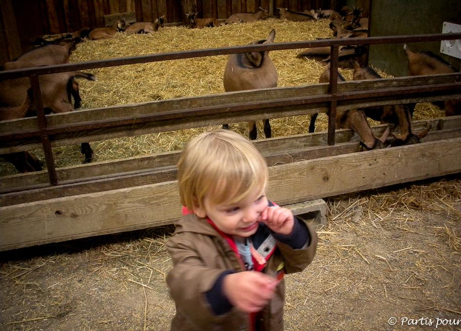 Chèvrerie d'Ozo, Izier. Activités aux environs de Durbuy
