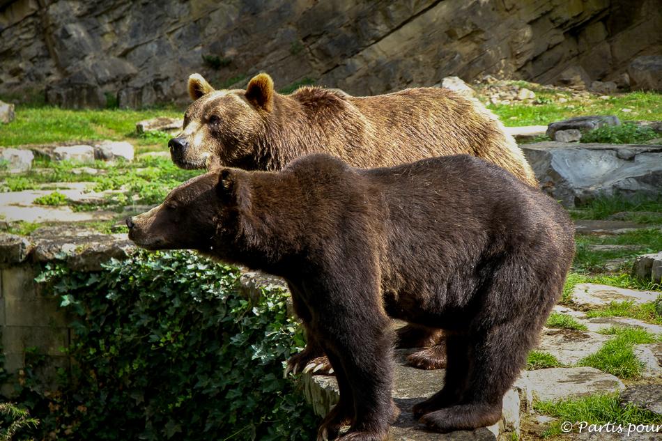 Ours, Big Five, Réserve d'Animaux Sauvages, Domaine des Grottes de Han, Han-sur-Lesse. Activités aux environs de Durbuy