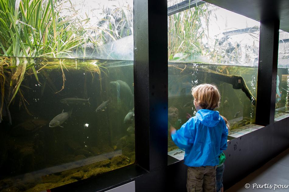 Aquarium, Riveo, Hotton. Activités Durbuy et environs