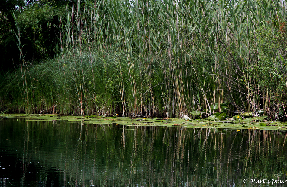 Parc National Hutovo Blato, Bosnie-Herzégovine. Cinq jours sur les routes de l'Herzégovine