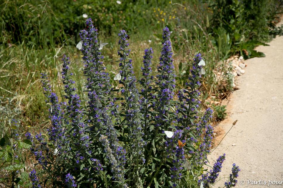 Papillons sur le plateau de Podvelez, Bosnie-Herzégovine. Cinq jours sur les routes de l'Herzégovine