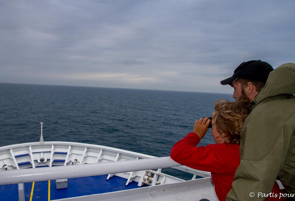Observation des cétacés, Traversée Amsterdam - Newcastle, DFDS Seaways