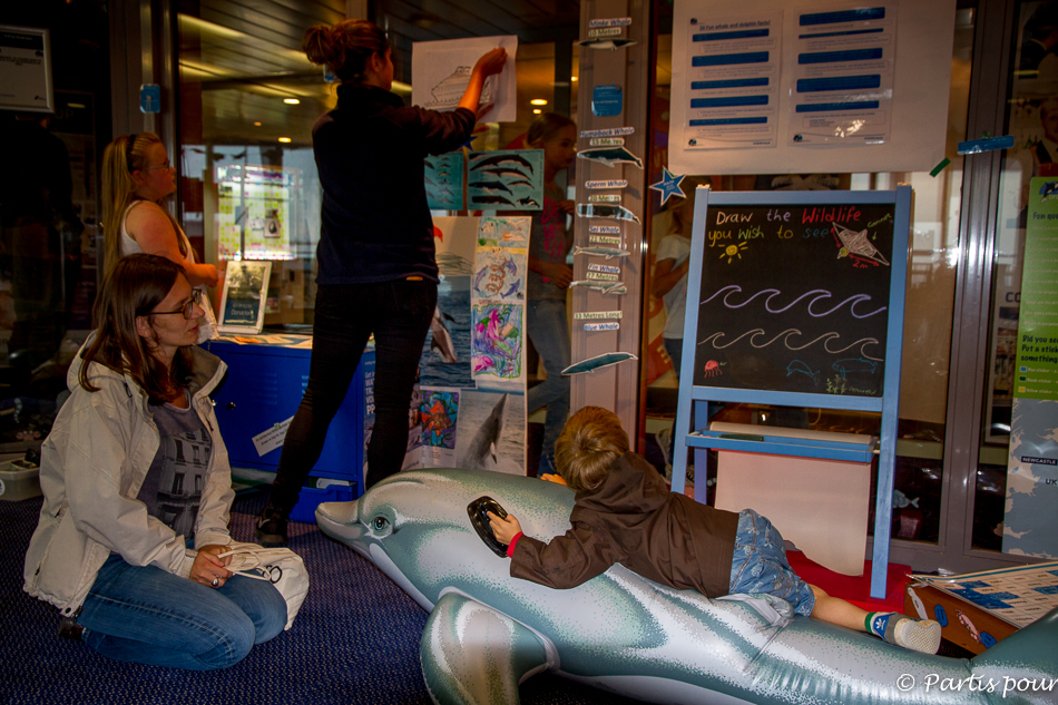 Orca Wildlife center, Traversée Amsterdam - Newcastle - DFDS Seaways