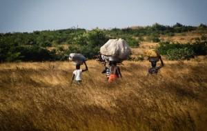 Dans les campagnes du Mali