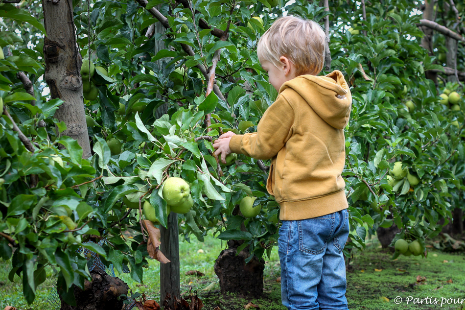 Bilan 2015. Cueillir des pommes en Alsace, France