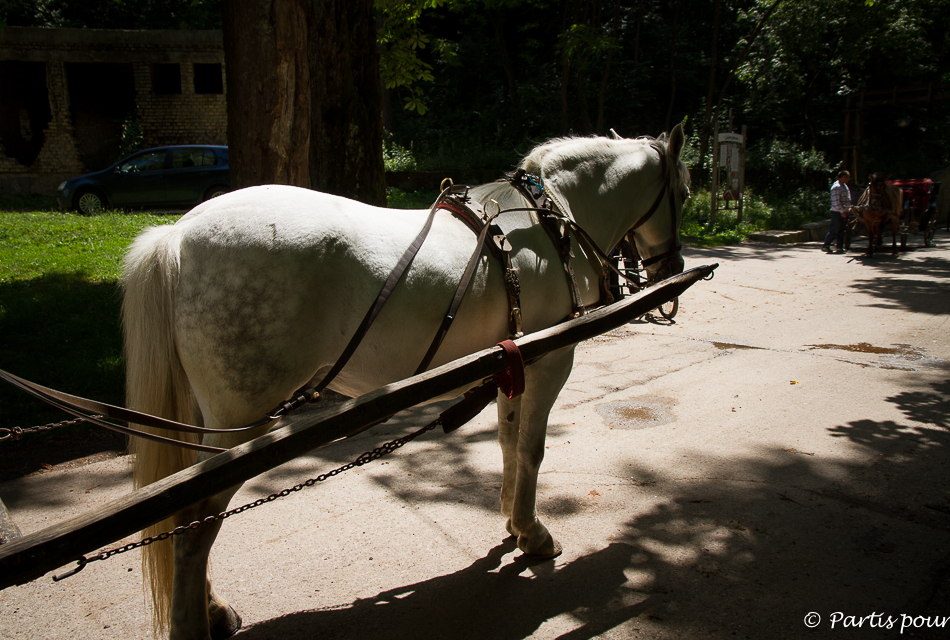 Vrelo Bosne, Ilidza. Balade en calèche. Sortir de Sarajevo