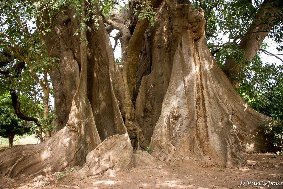 L'arbre sacré d'Abéné. Itinéraire d'un voyage au Sénégal