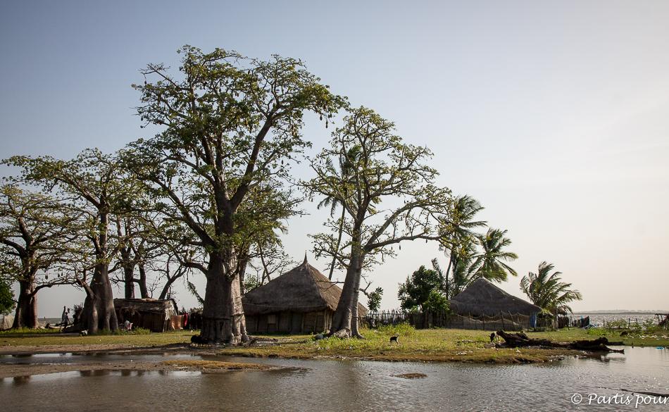 Baobabs sur l'île de Carabane. Itinéraire d'un voyage au Sénégal