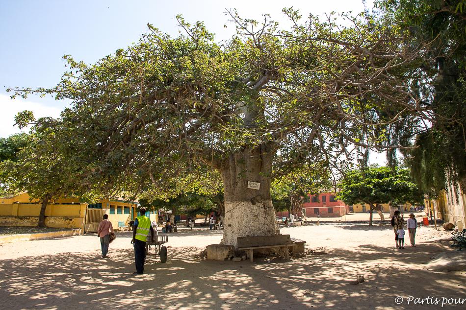 Boabab centenaire sur l'île de Gorée. Itinéraire d'un voyage au Sénégam