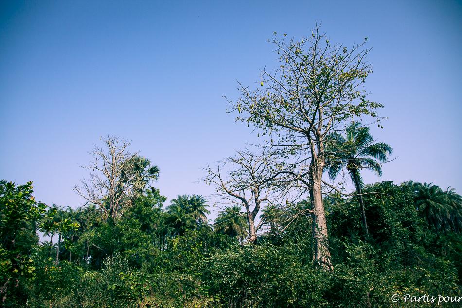 La forêt des Kalounayes. Itinéraire d'un voyage au Sénégal