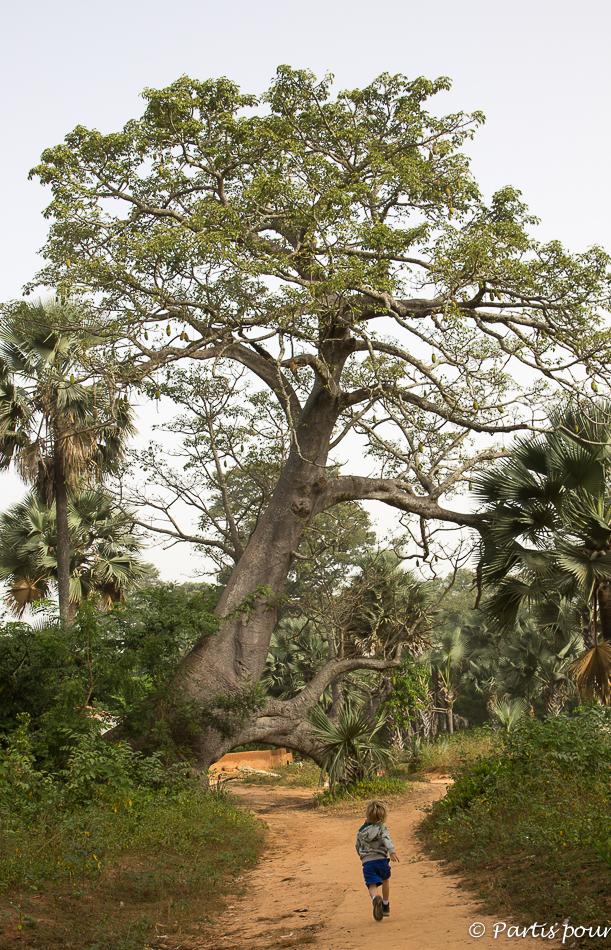 L'arche du Baobab dans la forêt de M'Lomp vers la Pointe Saint-George. Itinéraire d'un voyage au Sénégal