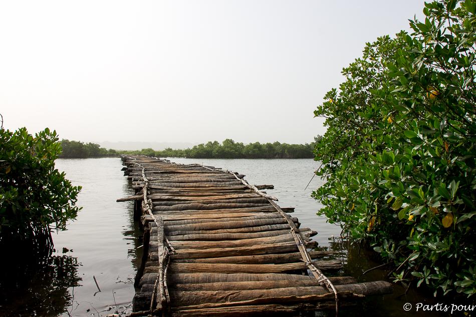 Passer sur une passerrelle dans la mangrove. Itinéraire d'un voyage au Sénégal