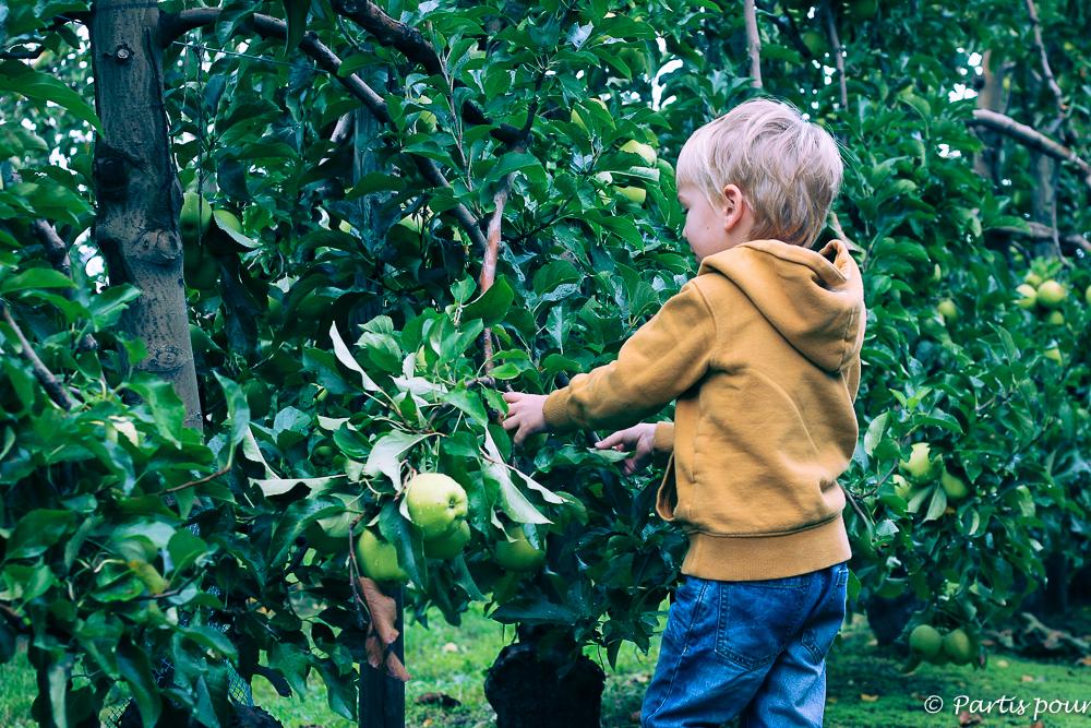 Cueillir des pommes à La Pommeraie à Sigolsheim. Que faire en Alsace avec un enfant ?