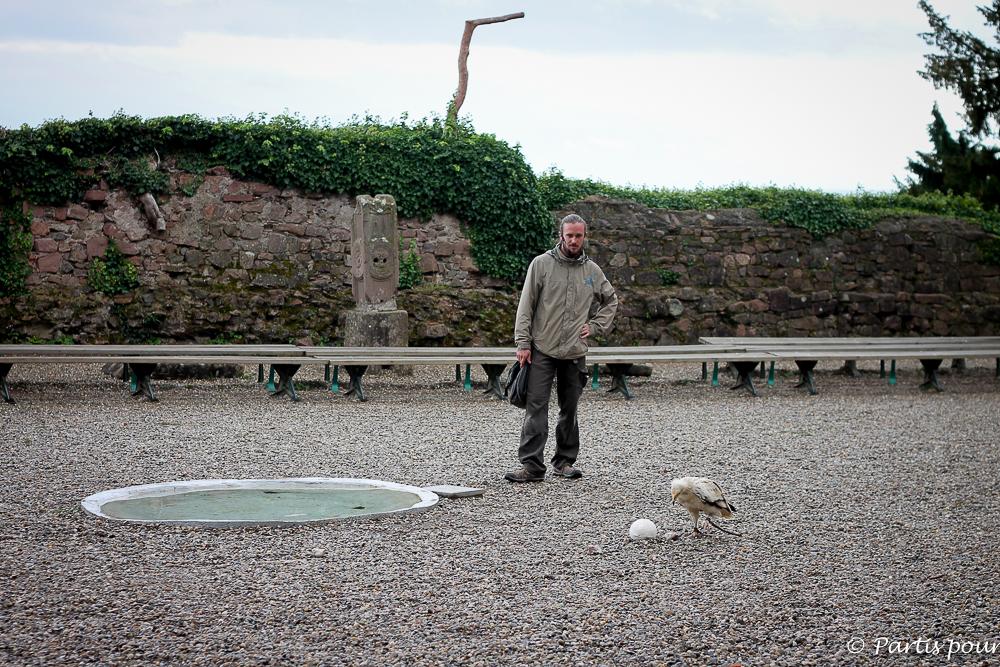 La Volerie des Aigles de Kintzheim. Que faire en Alsace avec un enfant ?