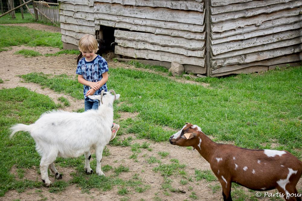 Rendre visite aux chèvres de la Ferme du parc Forestia. La Province de Liège en famille