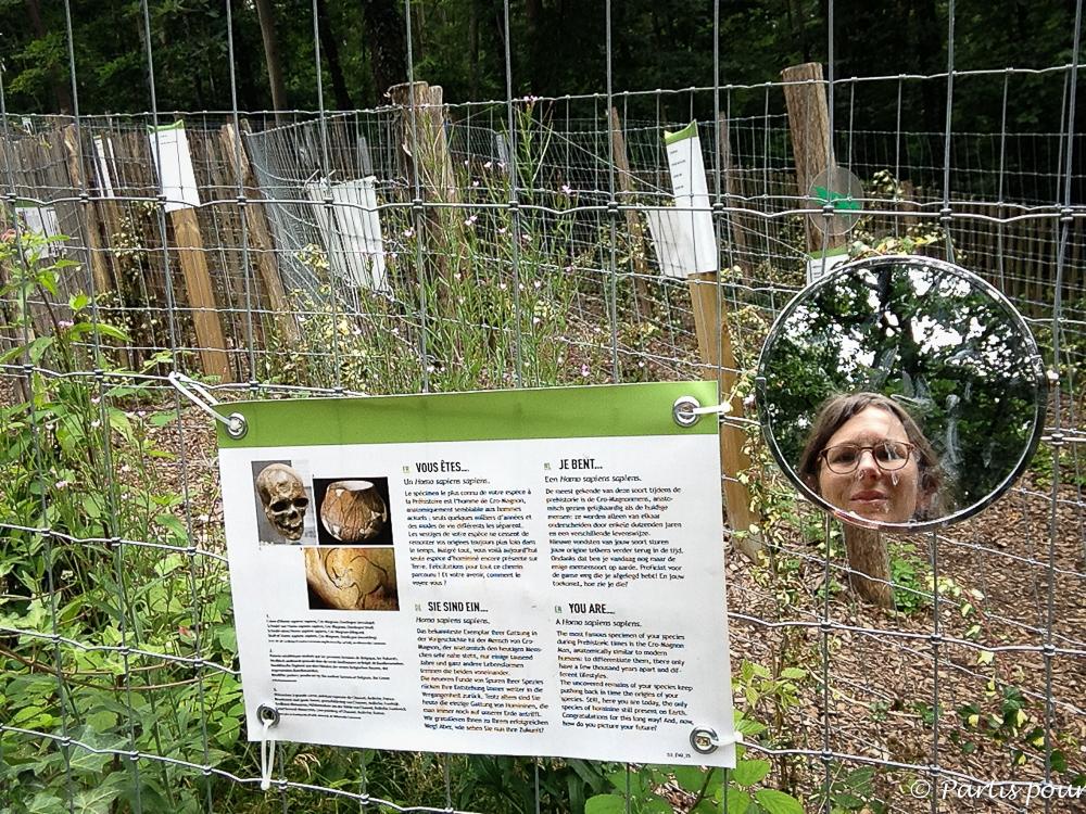 Devenir homo sapiens sapiens au labyrinthe de l'évolution du Préhistomuseum de Flémalle. La Province de Liège en famille