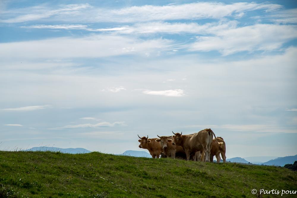 En se promenant sur les sentiers autour de Gorliz. Pays-Basque, Espagne