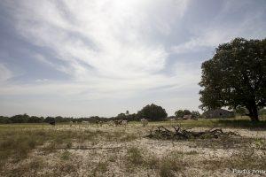 Sur l'île d'Ehidj, l'île des féticheurs, Casamance, Sénégal