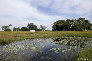 Sur l'île de Sifoka, Casamance, Sénégal