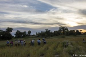 Dans les rizières au soleil couchant, Cachouane, Casamance, Sénégal