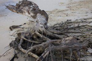 En se baladant sur la plage de Cachouane, Casamance, Sénégal