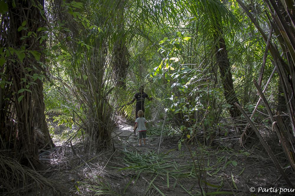 Partir en forêt pour ramener des branches de rônier pour la construction des plafonds des cases. Cachouane, Casamance, Sénégal