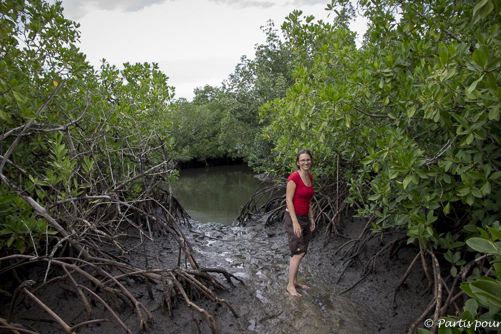 Marcher dans la mangrove sur l'île Dimoitout, Casamance, Sénégal