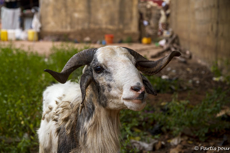 Parce que lui je l'aimais bien... Billet de Bamako #3. Mali
