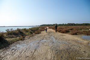 Promenades autour des étangs d'Arnel et du bois des Aresquiers.