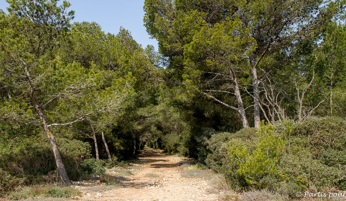 Le Bois des Aresquiers, pinède méditerranéenne. Hérault