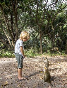 Bijilo Forest Park à Bijilo... Discuter avec les vervets