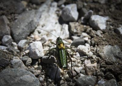 Insecte, Bosnie-Herzégovine
